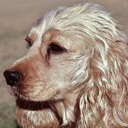 geräuscharme hunde rasierer