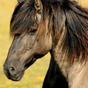 tests über pferde